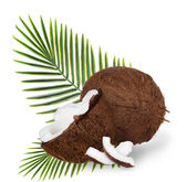 Cracked coconuts on white background — Foto Stock