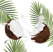 Cracked coconuts on white background — Stok fotoğraf