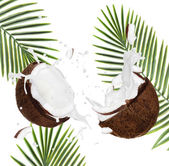 Cracked coconuts on white background — Stockfoto