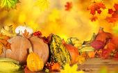 Krásné podzimní pozadí — Stock fotografie