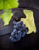 Wine grapes close-up — Stock Photo