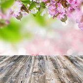 Spring background — Foto Stock