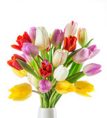 Tulips over blurred green background — Stock Photo