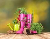 Buiten tuingereedschap en kruiden — Stockfoto