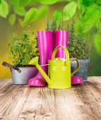 Outdoor gardening tools and herbs — Stock Photo