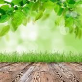 Свежая зеленая трава — Стоковое фото