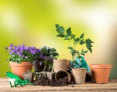 Outdoor gardening tools and plants. — Stock Photo