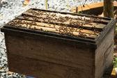 Natural wood bee box — Stock Photo