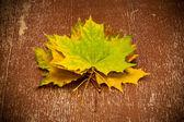 Autumn maple leaves, vintage style — Stock Photo