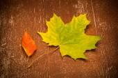 Autumn maple leaves, vintage style — Stock fotografie