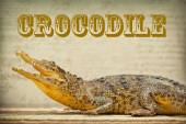 Predator crocodile, photo tinted in yellow — Stockfoto