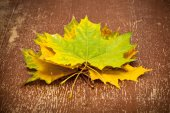 Autumn maple leaves, vintage style — Stockfoto