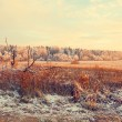 Country winter landscape. Dry grass, forest, snow — Stock Photo #64455567