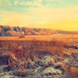 Country landscape at sunset. Field, forest, dry grass in the frost — Stock Photo #64455687