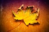 Maple leaf on bright background — Stock Photo