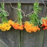 Fresh calendula, nasturtium,tagetes hanging for drying — Stock Photo #60765371