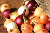 Different varieties of onions — Stock Photo