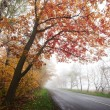 Highway in the autumn forest. Fog. — Stock Photo #53695685