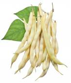 Yellow string beans isolated on a white background. — 图库照片