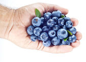 Blueberries in the man's hand over white. — Stock Photo