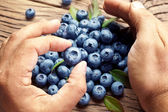 Blueberries in the man's hands. — Foto Stock