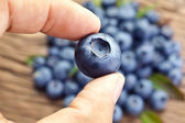 Blueberry in the man's hands. — Stock Photo