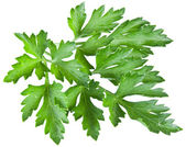 Green parsley isolated on a white. — Stock Photo