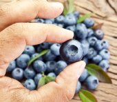 Blueberry in the man's hand. — Stock Photo