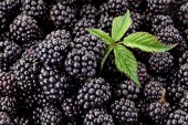 Fresh ripe blackberries with leaf. — Stock Photo