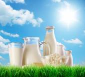 Dairy products on the grass. — Foto Stock
