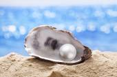 Shell with a pearl. — Stock Photo