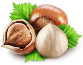 Hazelnuts with leaves on a white background. — Stock Photo