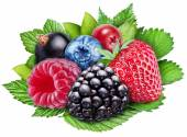 Berries on a white background. File contains clipping paths. — Stock Photo