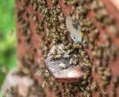 Bee hive. — Stock Photo