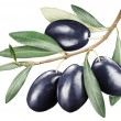 Black olives with leaves on a white background. — Stock Photo #70917879