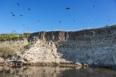 River-bank with breeding grounds of sand martins. — Stock Photo