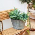 сезонные заводы дома двор — Стоковое фото #60052585