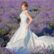 Beautiful Bride in wedding day in lavender field — Stock Photo #75622079