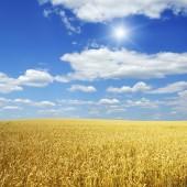 πεδίο σιτάρι και μπλε ουρανό με ήλιο — Φωτογραφία Αρχείου