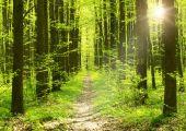 καλοκαίρι πρωί δάσος — Φωτογραφία Αρχείου