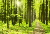 Summer morning forest — Stock Photo