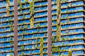 Plant Facade - Vertical garden — Stock Photo