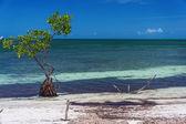 Sea and sunny beach — Stock Photo