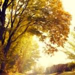 Autumn yellow leaves background — Stock Photo #53441699