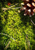 Autumn forest  background. Moss — Stock Photo