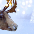 Christmas northern deer  — Stock Photo #60527277