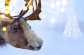 Christmas northern deer  — Stock Photo