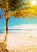 Art Hawaii  tropical sea beach — Stock Photo