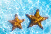 Art real live seastar on a white sand  background — Stock Photo