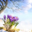 Art spring flowers — Stockfoto #64524061
